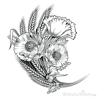 Vector poppy flower. engraving illustration