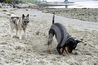 Dogs were playing