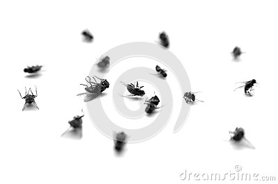 Dead Flies in a Pile