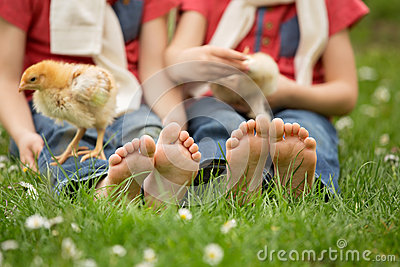 Cute little feet of small children, playing with baby chicks,