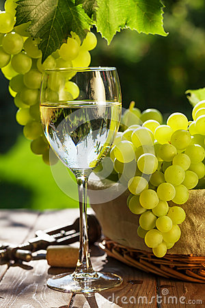 White wine glass, vine and bunch of grapes
