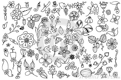 Set of black and white doodle flowers leaves. Hand drawn vector design elements.
