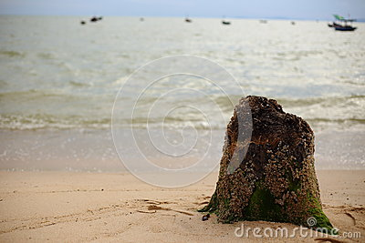 Stump and Beach