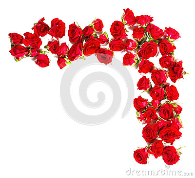 Bouquet of roses arranged to form of a border or design element for floral themes