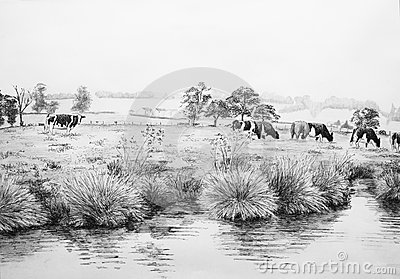 Cows in meadow illustration
