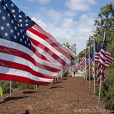 American flags. Memorial Day, Independence Day and Veterans Day