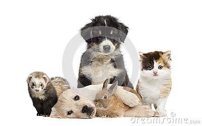 stock image of group of young pets