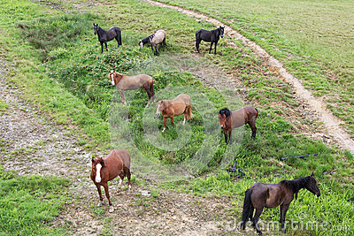 Herd of horses on a mountain pasture