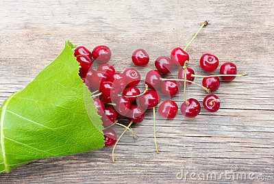 Bunch of red ripe berries cherries with tails in the green leaves of burdock