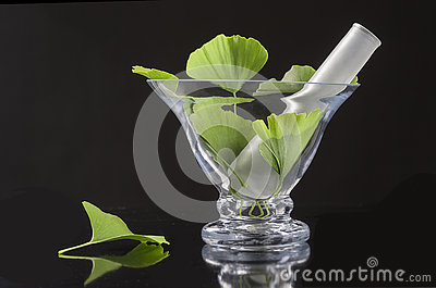 Ginko bilboa leaf with glass mortar on black background