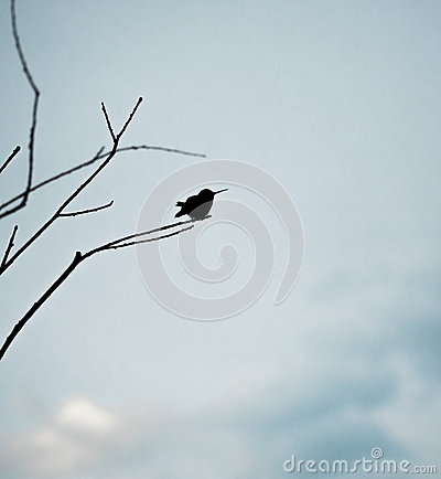 Silhouette of Hummingbird