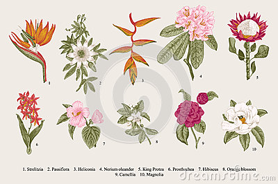 Exotic flowers set. Botanical vector vintage illustration.