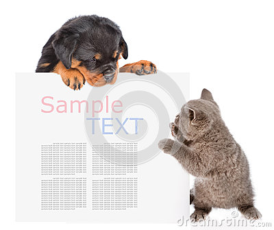 Playful cat and rottweiler puppy peeking from behind empty board