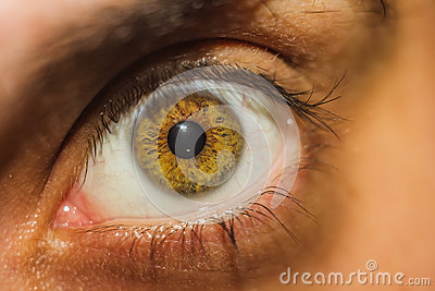 Closeup of a brown human eye