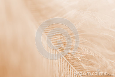 Sepia toned feather