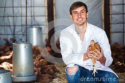Male vet holding chicken in hen house