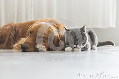 A Dog and A cat snuggle together