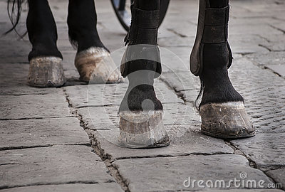 Horse hooves on the cobble street