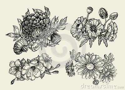 Flowers. Hand drawn sketch flower, poppy, chrysanthemum, dahlia. Vector illustration