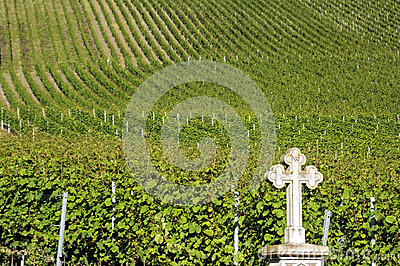 Vineyards on the Moselle wine village, Germany