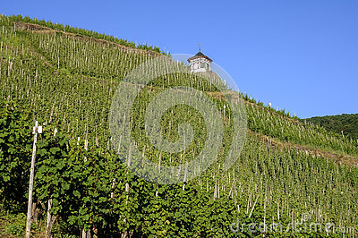 Vineyards on the Moselle and half-timbered house