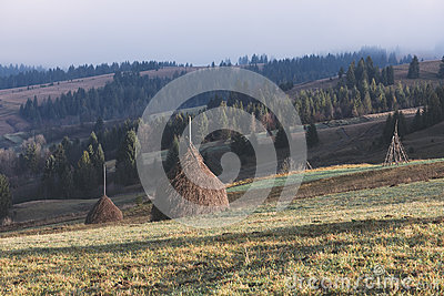 Rural landscape in the mountains. Haystacks dry hay in the field