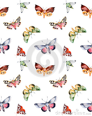 Butterflies and moths on white texture.