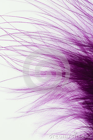 Fluffy purple feather