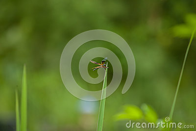 Dragonfly on grass.