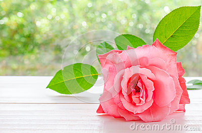 Beautiful pink rose on a white wooden table with light bokeh