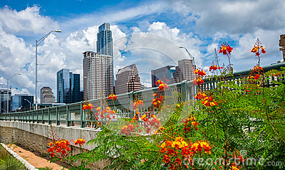 Orange Flowers Austin texas Afternoon Perfection Summer time Bliss Downtown Skyline Cityscape