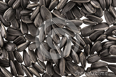 Background of black sunflower seeds