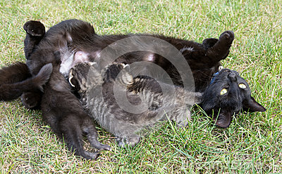 Black cat feeding her three little kittens