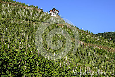 Vineyards on the Moselle and half-timbered shelter