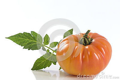Isolated yellow heirloom tomato