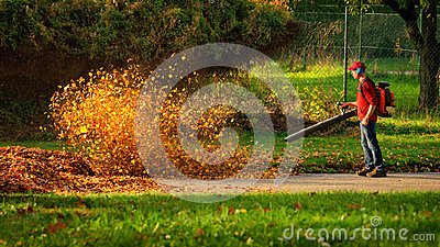 Heavy duty leaf blower in action