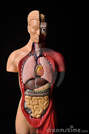 Look inside body, human anatomy
