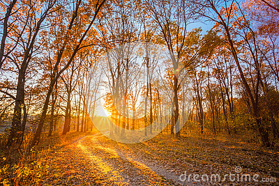Winding Countryside Road Path Walkway Through Autumn Forest. Sunset