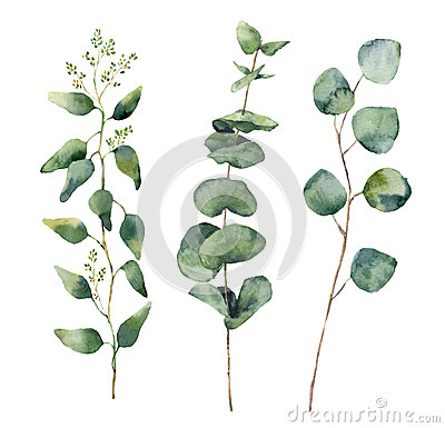 Watercolor eucalyptus round leaves and branches set. Hand painted baby, seeded and silver dollar eucalyptus elements. Floral illus