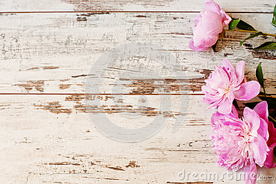 Stunning pink peonies on white light rustic wooden background. Copy space, floral frame. Vintage, haze looking.