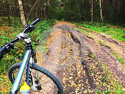 Mountain bike on forest trail