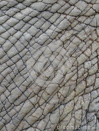 Close up of elephant's skin showing textures, patterns and lines