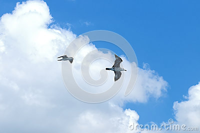 Two sea gulls in flight against of blue sky
