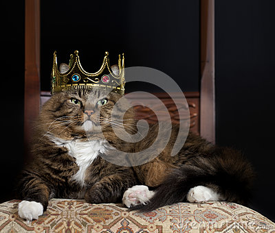 Cat as Royalty