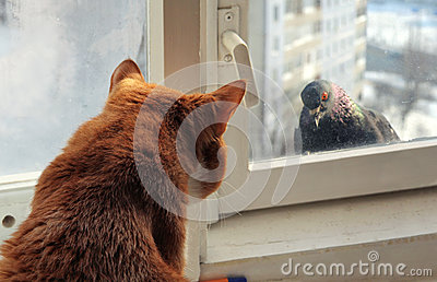 Cat and Pigeon
