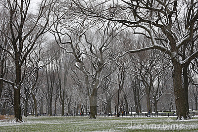 Snow covered trees and lawn in Central Park