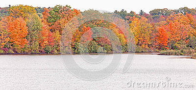 Fall trees and pond