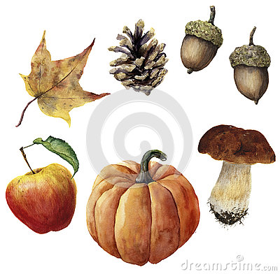 Watercolor autumn harvest set. Hand painted pine cone, acorn, pumpkin, apple, mushroom and yellow leaf isolated on white