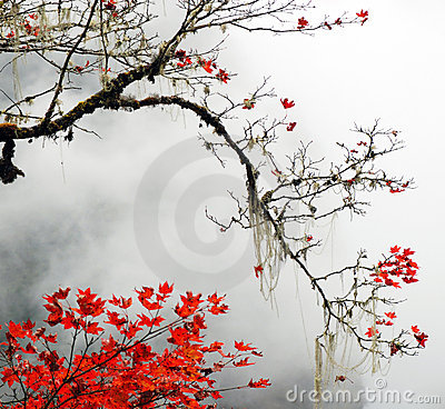 Autumn foggy day in  mountains