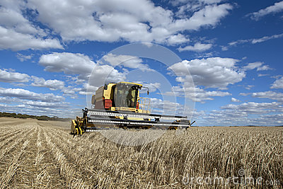A farmer harvests a broadacre paddock of wheat.